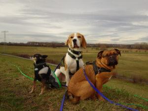 Hunde Leipzig Hundegruppe Jede Rasse