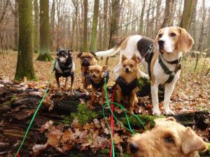 Hunde Leipzig Hundebetreuung Wald