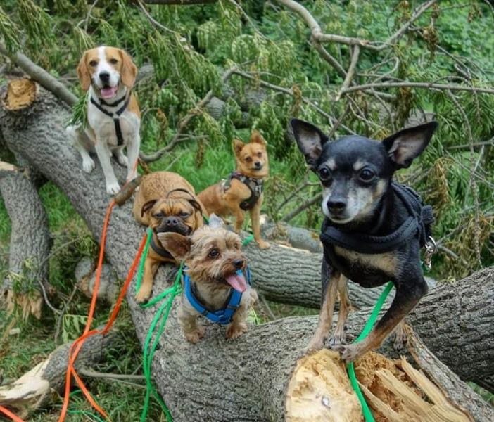 Hunde Leipzig Hundegruppe Auslastung