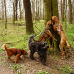 Hunde Leipzig Hundegruppe Wald Scchnüffelspiele