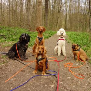 Hunde Leipzig Wald Ausflug Gassi gehen