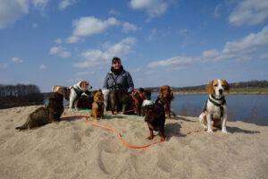 Dogwalker Hundesitter Leipzig mit Hundegruppe