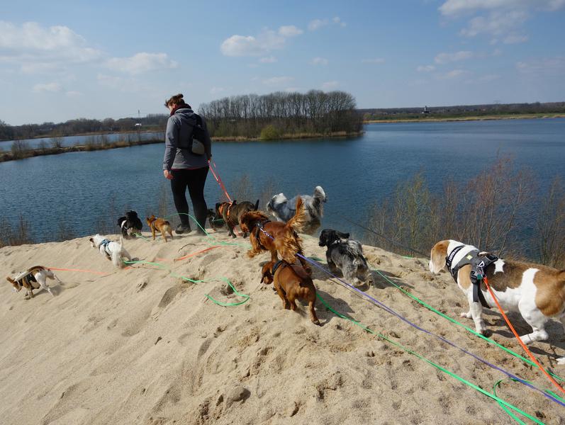 Hunde Leipzig Strand Baden