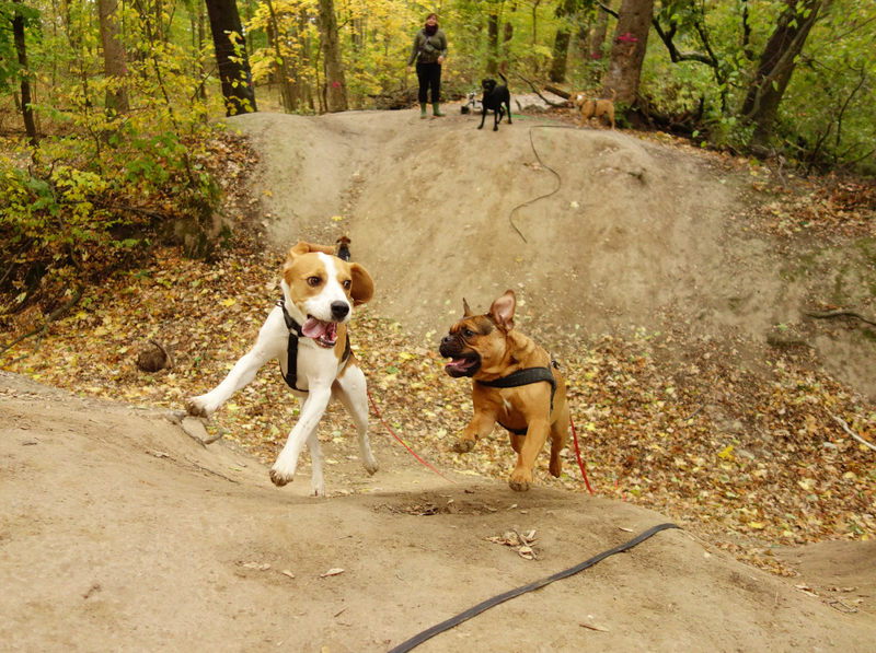 Hunde Leipzig Hundefreunde Spielen Wald
